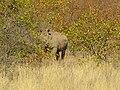 Mapungubwe Cultural Landscape-114924.jpg
