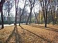 Mariinsky park in the autumn. Fallen leaves(1).jpg