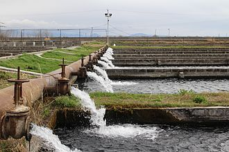 Raceway (aquaculture) - Flow-through raceway system in Masis, Armenia