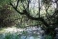 Maya Wendler - GPS 51.201643, 6.883316 - Naturschutzgebiet Unterbacher See (Eller Forst) 40627 Duesseldorf (14).jpg