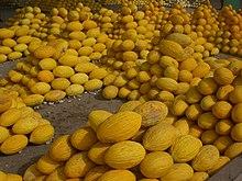 قائمة الفواكه 220px-Melon-Tun