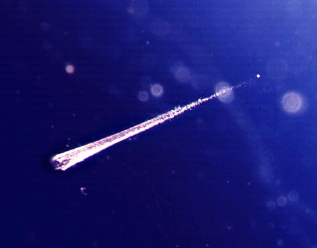 Meteoroid embedded in aerogel. The meteoroid is 10 µm in diameter and its track is 1.5 mm long. - Meteoroid