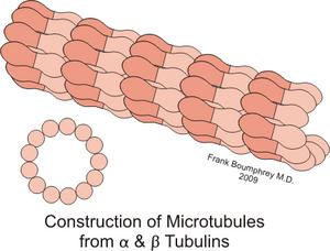 Tubulina