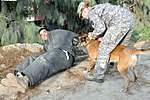 Military Police Dogs Train to Assist ISAF, ANA Locate IEDs, Narcotics DVIDS309811.jpg