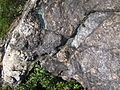 Mineralienreicher Felsbrocken am Südhang des Silberbergs 2.JPG