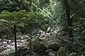 Minnamurra Rainforest - panoramio (11).jpg