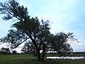 Mitsue, Iwata, Shizuoka Prefecture 438-0127, Japan - panoramio.jpg