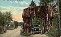 Model T driving through cedar stump, ca 1913 (MOHAI 4089).jpg