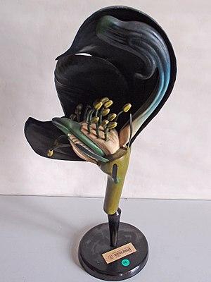 Aconitum carmichaelii - Image: Modell von Aconitum napellus (Blauer Eisenhut) Osterloh Nr. 105
