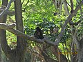 Mokey in the tree.JPG