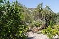 Monagri, Cyprus - panoramio (4).jpg