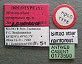 Monomorium gongromos casent0173590 label 1.jpg