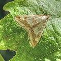 Moth 3408.jpg