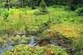 Mountaintop Bog (2) (9338411979).jpg