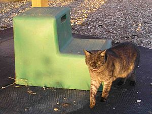 Mounting block - A modern mounting block, and cat for scale.