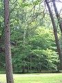 Mountwood Park - panoramio.jpg