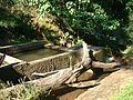 Mozambico06-risorse idriche Lugela-contesto- COSV (2).jpg