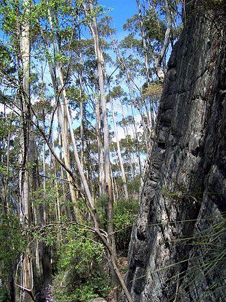 Mount Imlay National Park - Image: Mt Imlay & White Ash & sandstone