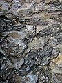 "Mudshale clasts in pebbly sandstone (""Sharon Conglomerate"", Lower Pennsylvanian; Jackson North roadcut, Ohio, USA) 67 (23891106118).jpg"