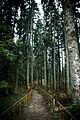 Nacionalni park Tara, Šumska učionica.jpg