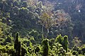 Nam Ou-Bootsfahrt-58-Dschungel-gje.jpg