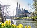 Narcisses aux abords de l'Église Saint-Paul de Strasbourg (40479135811).jpg