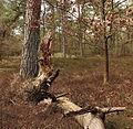 Nationaal Park Drents-Friese Wold. Locatie Dieverzand 001.JPG
