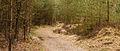 Nationaal Park Drents-Friese Wold. Locatie Dieverzand 05.jpg