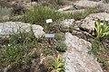 National Botanic Garden of Israel 03.jpg