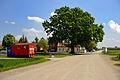 Naturdenkmal 436 Stieleiche 2.jpg