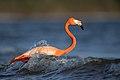 Nature's Bird Bath (Unsplash).jpg