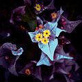 Nature (21176008266).jpg
