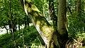 Naturschutzgebiet Ilmwand Ilmwand Nord I.jpg