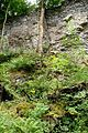 Naturschutzgebiet Saupark - Kleiner Deister - Felsformation der oberen Jura (Korallenoolith) (11).jpg
