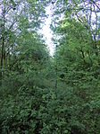 Nebenbahn Finnentrop-Wenholthausen (5777975516).jpg