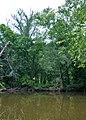 Neuse River - panoramio (1).jpg