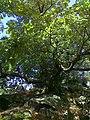 Niebieski szlak ze Skalnej na Ślężę - panoramio (1).jpg