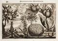 Nieuhof-Description-générale-de-la-Chine-1665 0869.tif