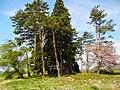Nonakadō Towadaōyu, Kazuno-shi, Akita-ken 018-5421, Japan - panoramio.jpg