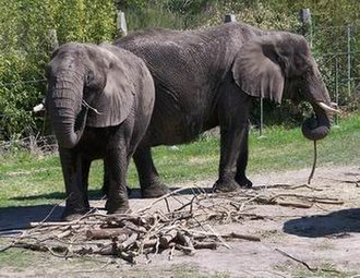 Virginia Zoological Park - Image: Norfolk Zoo Elephants 2