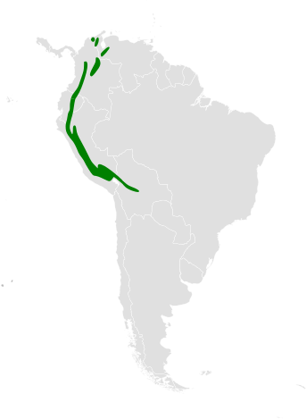 Notiochelidon murina distribution map