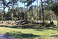 Oak tree down and damaged Pine tree by Hurricane Michael, Southern Regional Technical College, Thomasville.jpg