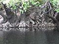 Ogeche Trees.jpg