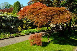 Botanic Garden of the Jagiellonian University - Tree species and plants in the garden