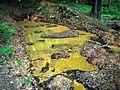 Old mine - stará baňa na zlato - panoramio.jpg