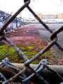 Old running lanes at Hinchliffe Stadium Paterson, NJ.jpg