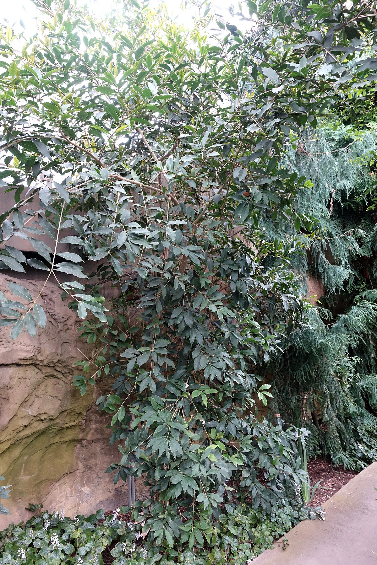 Botanic Garden Food For Thought Menu