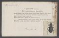 Omaseus - Print - Iconographia Zoologica - Special Collections University of Amsterdam - UBAINV0274 011 11 0048.tif