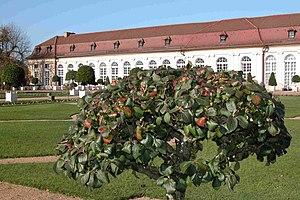 Ansbach Residence - Garden