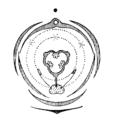 Orchis flowerdiagram.png